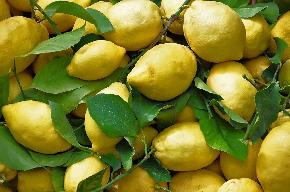 Limone-Costa-di-Amalfi-IGP